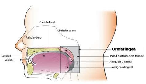 CDC   Cánceres asociados al virus del papiloma humano  VPH