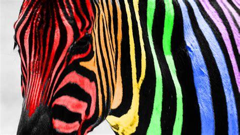 Cebra de colores   1920x1080 :: Fondos de pantalla y ...