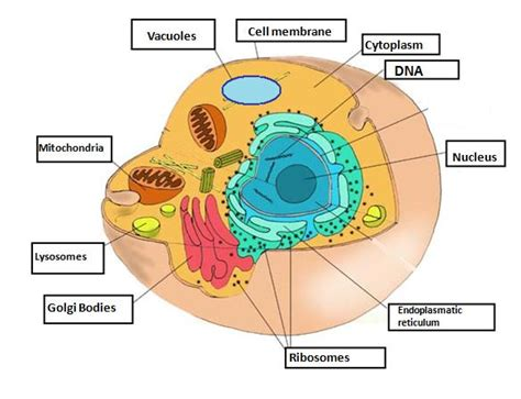 Cell structures | SCIENCE