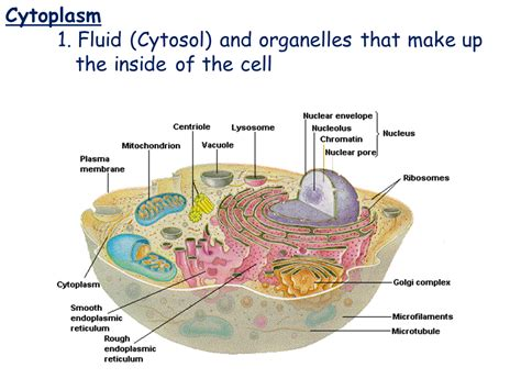 Cell Types and Cell Structure   Presentation Biology