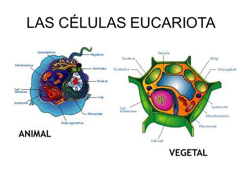 Celula Animal Eucariota   SEONegativo.com