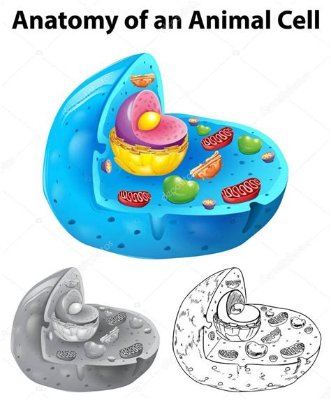 Celula animal para dibujar facil sin nombres | Anatomía de ...