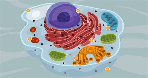 Célula eucariota animal – Prevención en Salud Proactiva