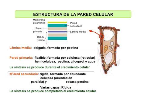 Celula_ Membranas De Secrecion