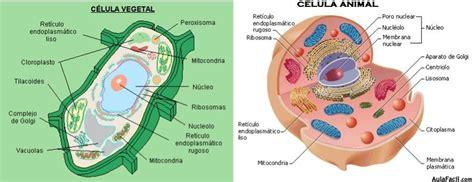 Célula vegetal y célula animal   Origen de la Vida