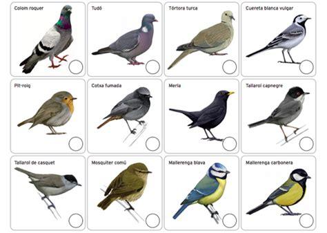 Cens d'ocells   El Culturista
