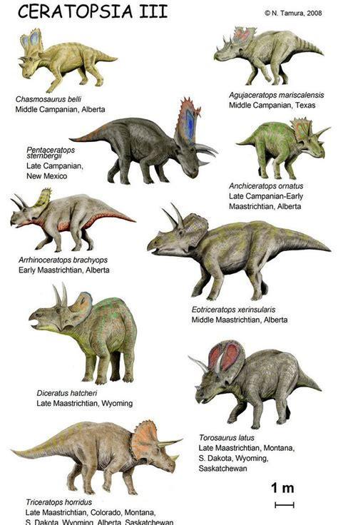 Ceratopsia   Alchetron, The Free Social Encyclopedia