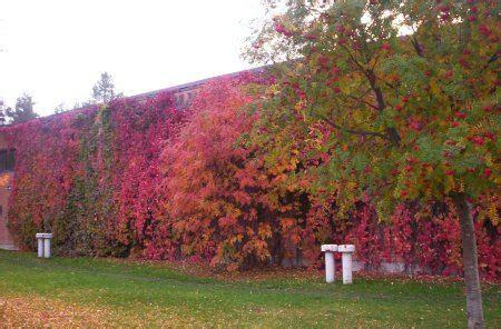 cerramientos vegetales 1   Rincón de jardín, Muro vegetal ...