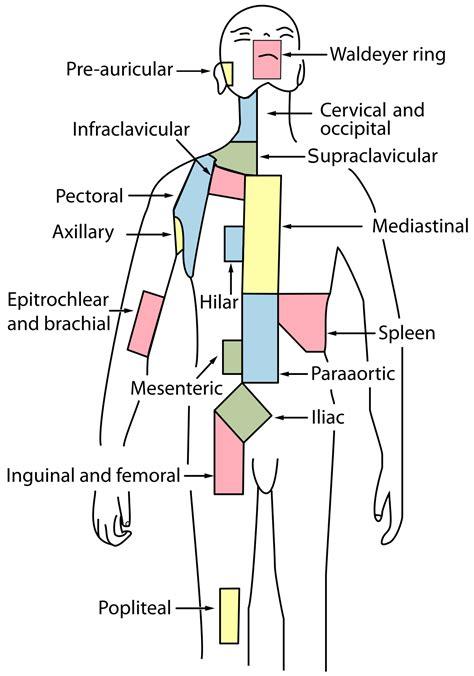 Cervical lymph nodes   Wikipedia