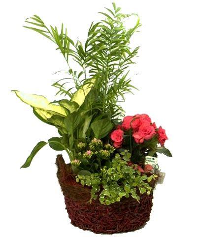 Cesta Redonda de Plantas a domicilio. Envía flores con ...