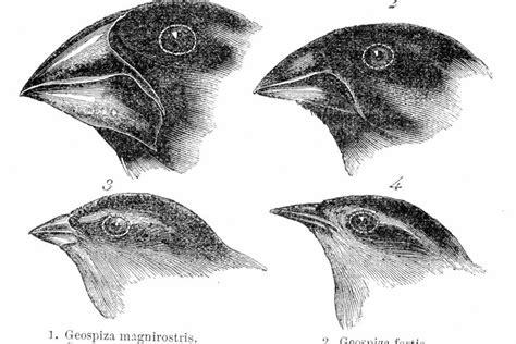 Charles Darwin: La teoría de la evolución | Geniolandia