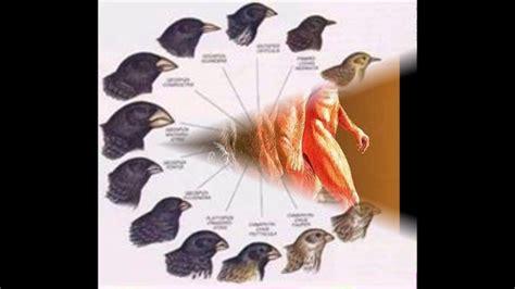Charles Darwin, Teoría de la evolución de las especies y ...
