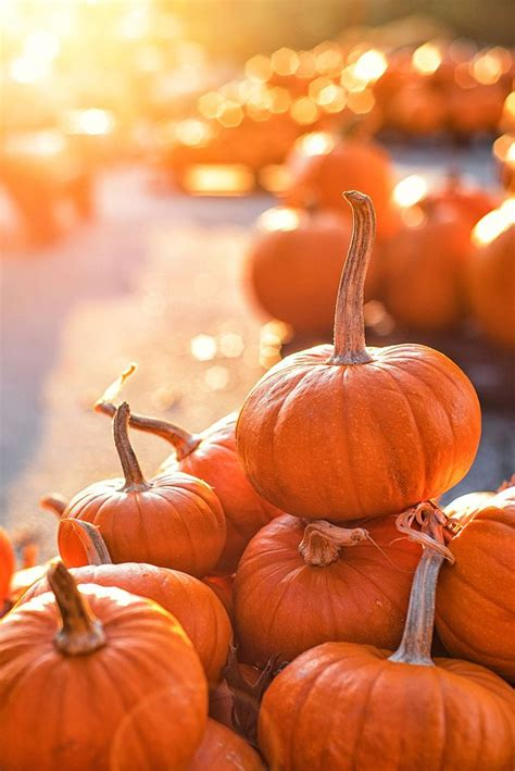 Check out the Best Pumpkin Patch in Your State  Some Even ...