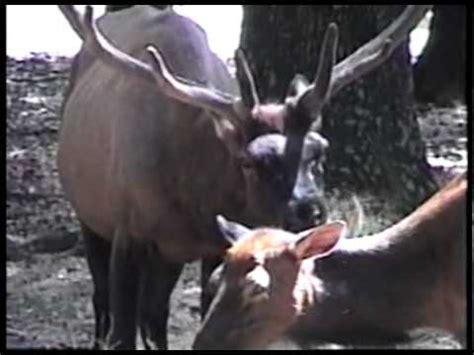 Chehaw Park Zoo, Albany, GA  8mm Travel Video series   YouTube