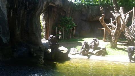 Chimpancés pidiendo comida en el Zoológico de Barcelona ...
