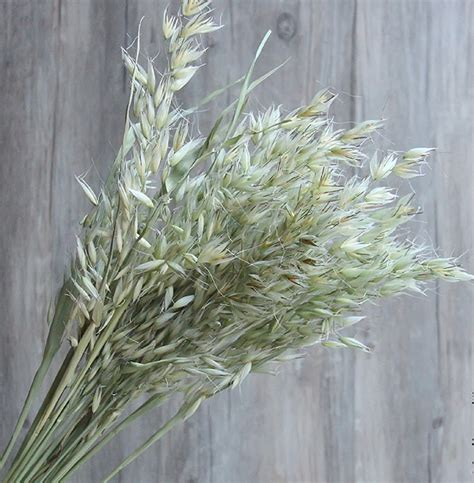 China Fair price Dried Flowers Oat Wholesalers Company ...