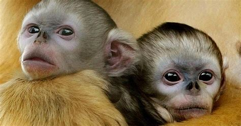 China Tightens Law on Eating Rare Animals