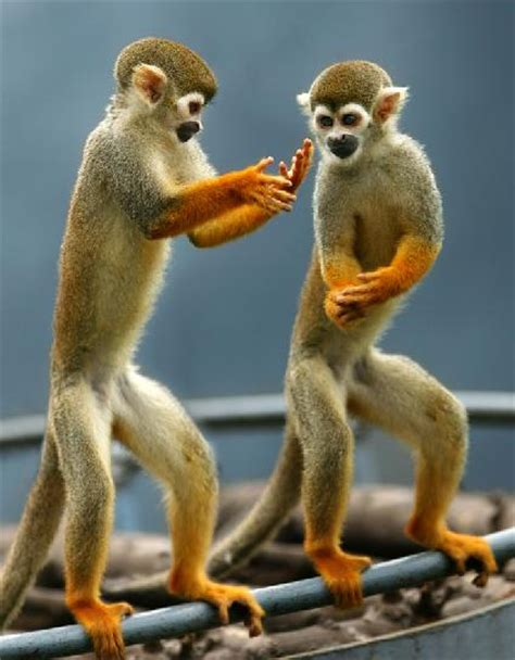 China to artificially breed rare golden monkeys   China.org.cn