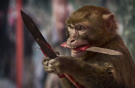 Chinese New Year: Cruel practice of  monkey training  in ...
