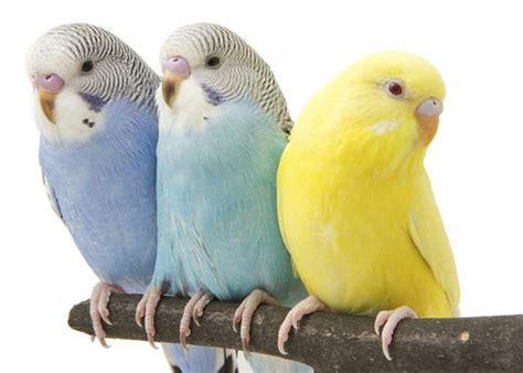 Choosing the Right Pet Bird