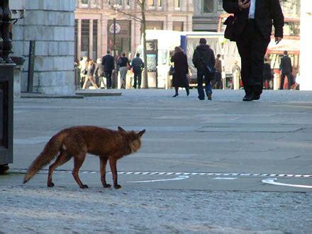 christian barnard blog: Urban Animals