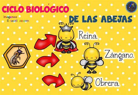 Ciclo biológico de las abejas para niños   9  – Imagenes ...
