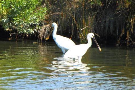 Ciconiiformes aves zancudas   Paperblog