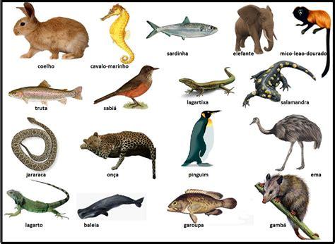 Ciências Biológicas: O Reino Animal