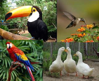 Ciências e Biologia: Biologia Animal   Vertebrados e ...