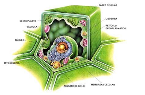 CIENCIAS NATURALES: TEORIA CELULAR