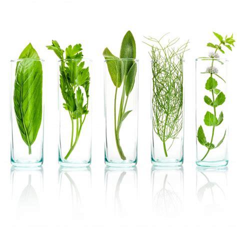 Ciérrese encima de las botellas de hierbas aromáticas ...