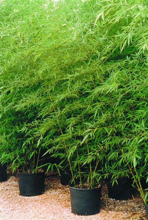 Cinco plantas resistentes a la sequía | Guía de Jardinería
