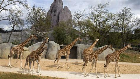 Cinq idées reçues sur le nouveau zoo de Paris