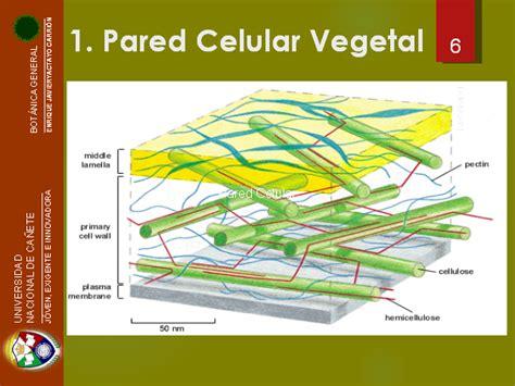 Citología vegetal   Monografias.com