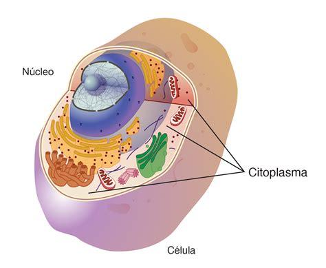 Citoplasma | NHGRI