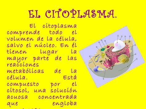 Citoplasma respiracion celular