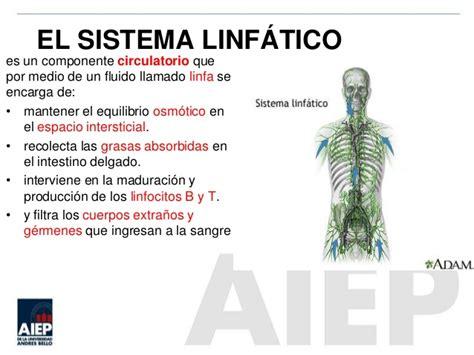 Clase 6 sist linfatico