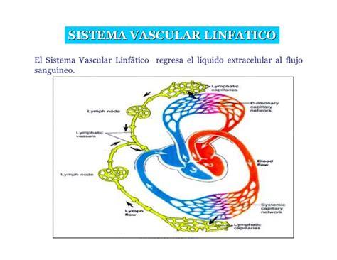 Clase 7 1 Sistema Linfatico