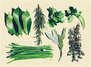 Clases de hierbas aromáticas   Tendenzias.com