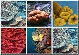 Clasificación característica de los seres vivos: Esponjas ...