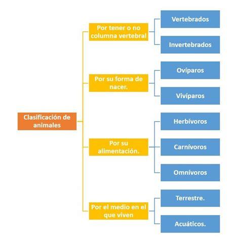 Clasificación de animales   ¿Cómo se clasifican?