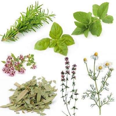 Clasificación de hierbas medicinales de acuerdo a su ...