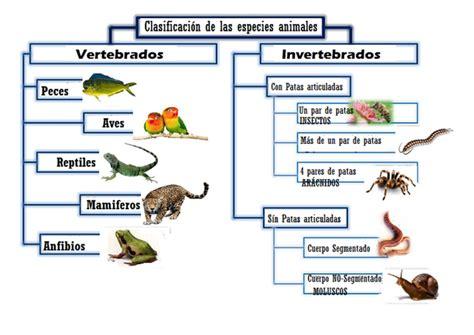 CLASIFICACION DE LAS ESPECIES ANIMALES   Encuentra lo que ...
