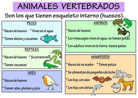 CLASIFICACIÓN DE LOS ANIMALES » Especies, alimentación y ...