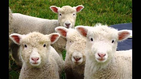 clasificación de los animales segun su alimentación ...