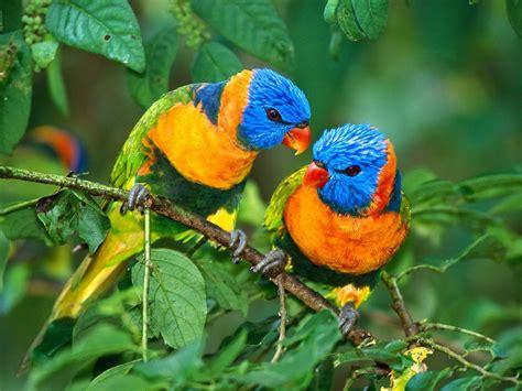 Clasificación de los Seres Vivos: Aves