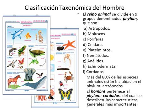 Clasificación Taxonómica del Hombre   ppt video online ...