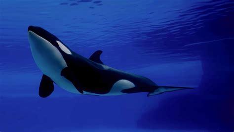 clasificacion y caracteristicas de animales marinos carnívoros