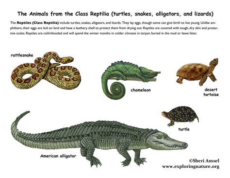 Class   Reptiles  4th Grade and up
