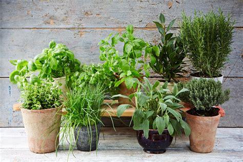 Claves y consejos para las plantas aromáticas en el jardín